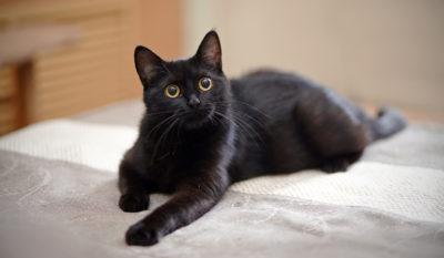 gato negro en el sueño gato negro significado del sueño