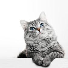 soñar con gatos significado del sueño del gato